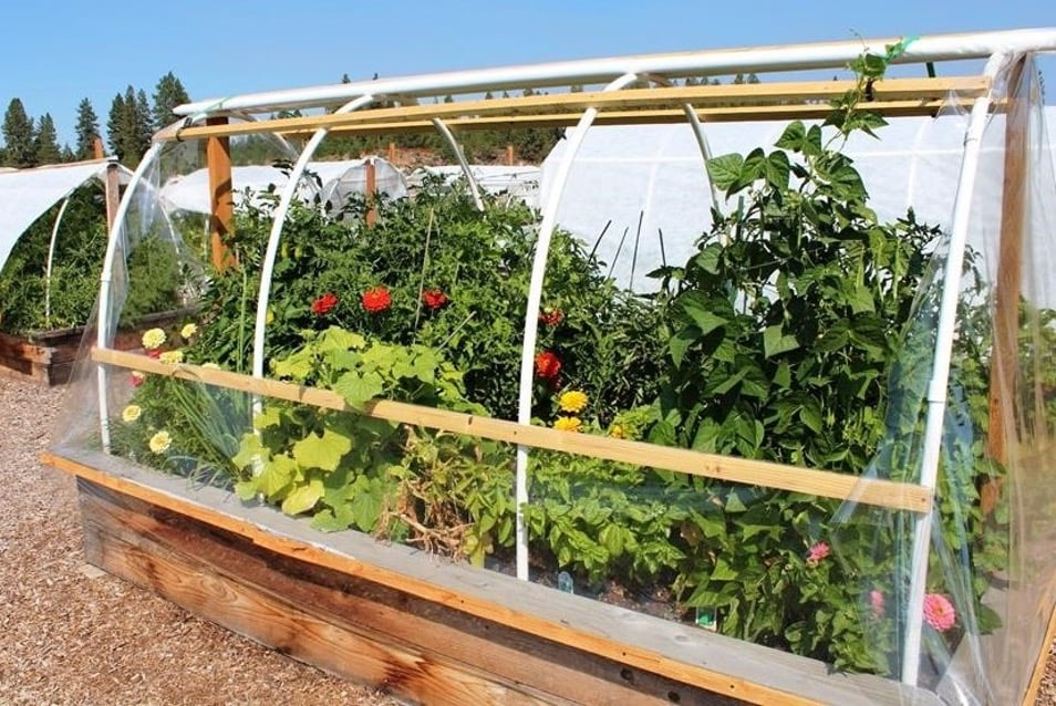 August Greenhouse 2021